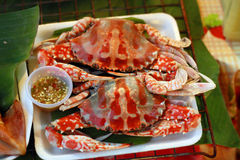 Steamed crabs on white foam plates Royalty Free Stock Image