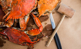 Free Steamed Crabs With Spices. Maryland Blue Crabs. Stock Image - 83970081