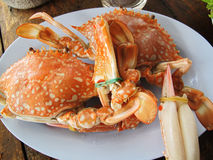 Steamed crap  Blue crab Stock Image