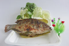 Steamed fish. Royalty Free Stock Photo