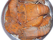 Steamed flatheaded lobster Royalty Free Stock Images