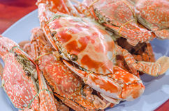 Steamed flower crab Stock Photos