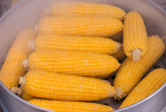 Steamed Fresh Corn, Corn boiling. Steamed Fresh Corn, Corn boiling sweet corn, vegetables Stock Images