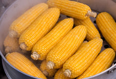 Steamed Fresh Corn, Corn boiling. Steamed Fresh Corn, Corn boiling sweet corn, vegetables Royalty Free Stock Images