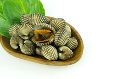 Steamed gjorde vit musslor Arkivbild