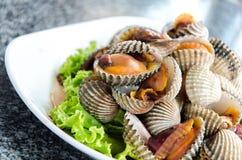 Steamed gjorde vit musslor Royaltyfria Foton