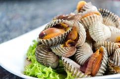 Steamed gjorde vit musslor Arkivfoto