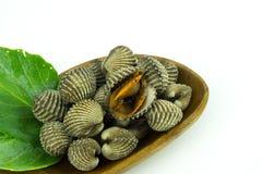 Steamed gjorde vit musslor på vit bakgrund Arkivfoton