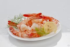 Steamed Jumbo headless shrimps with deli leaves and Lemon on white plate on white background Royalty Free Stock Photography