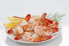 Steamed Jumbo headless shrimps with deli leaves and Lemon on white plate on white background Royalty Free Stock Images