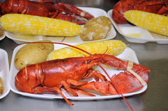 Steamed lobster dinner with potato and corn Stock Images