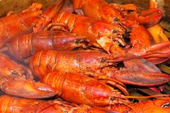 Steamed lobsters Royalty Free Stock Photo