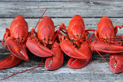 Steamed Lobsters - in a Row with Claws Crisscrossed. Steamed Lobsters - 4 new England Lobsters in a row with claws crisscrossed. (Ready for feasting Stock Images