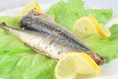 Steamed mackerel Royalty Free Stock Images