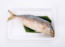 Steamed mackerel Stock Image