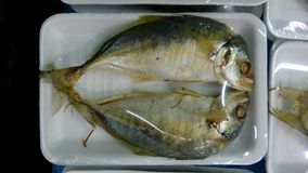 Steamed mackerel in pack Stock Photos