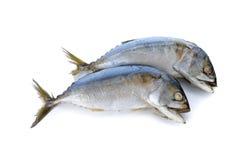 Steamed mackerel on white Stock Image