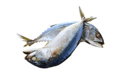Steamed mackerel on white Royalty Free Stock Photos
