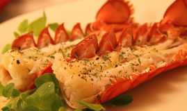 Steamed Maine lobster tails