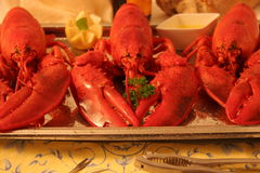 Steamed Maine lobsters Stock Photo