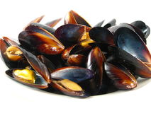Steamed Muscles Stock Photography