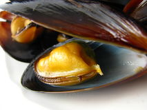 Steamed Muscles Royalty Free Stock Photography