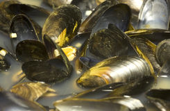 Steamed mussels. Stock Image