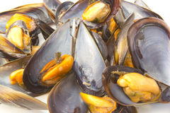 Steamed Mussels. Plate of steamed mussels to eat a snack Stock Image