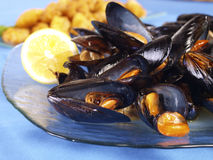 Steamed Mussels Royalty Free Stock Photos