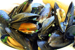 Steamed Mussels. This is an image of steamed mussels in white wine garlic sauce stock photos
