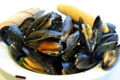 Steamed Mussels. This is an image of steamed mussels in white wine garlic sauce royalty free stock images
