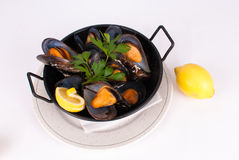Steamed mussels Royalty Free Stock Photo