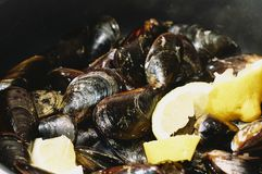 Steamed mussels in a classic pot with some pieces of lemon stock photo