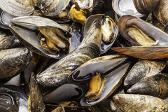 Steamed Mussels Close Up Stock Photo