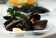 Steamed mussels closeup Royalty Free Stock Images