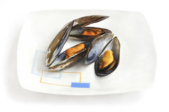 Steamed mussels on the plate. Royalty Free Stock Photography