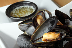 Steamed mussels plate Royalty Free Stock Images