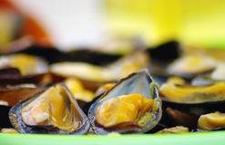 Steamed mussels on the plate Stock Image