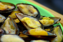 Steamed mussels on the plate Royalty Free Stock Photos