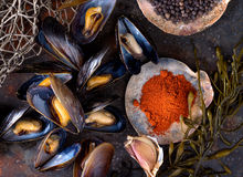 Steamed Mussels. On a rustic background with paprika, pepper, garlic, and seaweed Royalty Free Stock Photography