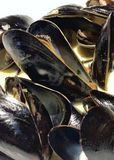 Steamed mussels in white sauce stock image
