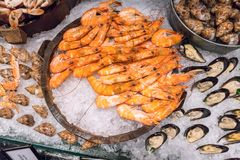 Steamed prawns in wooden bucket by sea snails and mussels on ice. In hotel buffet line Royalty Free Stock Photo