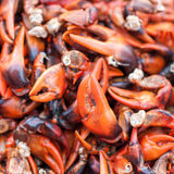 Steamed Red Crab Claw Royalty Free Stock Images
