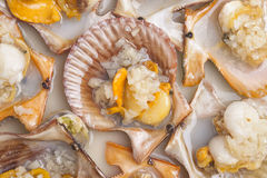 Steamed scallops, Chinese foods Stock Images