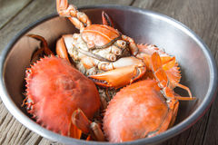Steamed Sea Crabs. On stainless bowl Royalty Free Stock Photography