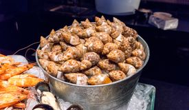 Steamed sea snails in ice bucket by prawns and mussels on ice. In hotel buffet line Stock Photo