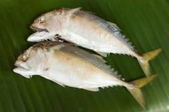 Steamed short-bodied mackerel on banana leaf. Royalty Free Stock Photo