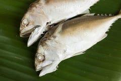 Steamed short-bodied mackerel on banana leaf. Royalty Free Stock Image