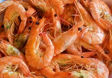 Steamed shrimps food Royalty Free Stock Photo
