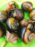 Steamed snails on plate Stock Photography